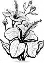 natura/fiori/ibisco_1.JPG