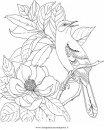 natura/fiori/magnolia_2.JPG