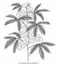 natura/fiori/mimosa_mimose.JPG