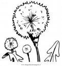 natura/fiori/soffione_1.JPG