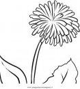 natura/fiori/soffione_4.JPG