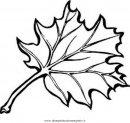 natura/foglie/foglia_44.JPG