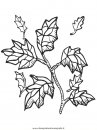 natura/foglie/foglie19.JPG