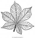 natura/foglie/ippocastano.JPG