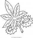 natura/foglie/ippocastano_2.JPG