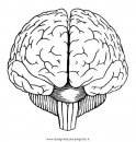 persone/corpo_umano/cervello_3.JPG