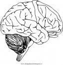 persone/corpo_umano/cervello_4.JPG