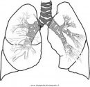 persone/corpo_umano/polmoni.JPG